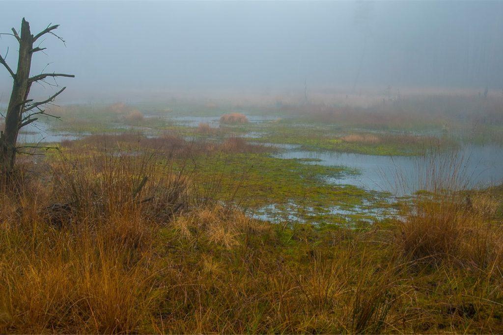 Das Wasag-Moorgebiet bietet eine seltene Pflanzen- und Vogelvielfalt.