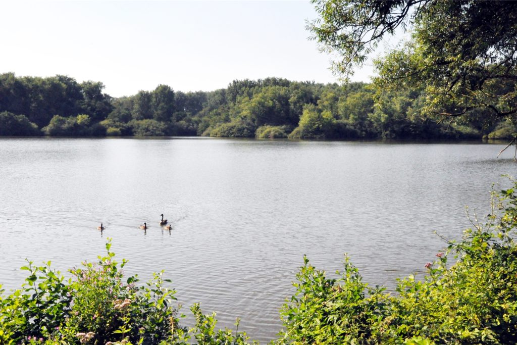 Der Brunosee liegt auf der Grenze zwischen Castrop-Rauxel und Dortmund. Er ist Teil des Naturschutzgebiets Beerenbruch.