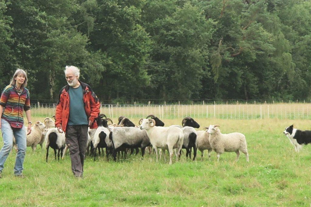 Christoph und Margret Dorr beweiden im Nebenerwerb seit 2015 Grünflächen des RVR mit ihren Schafen. Diese Schafe sorgen mit ihrem Kot für die Fortpflanzung von Stierkäfern.