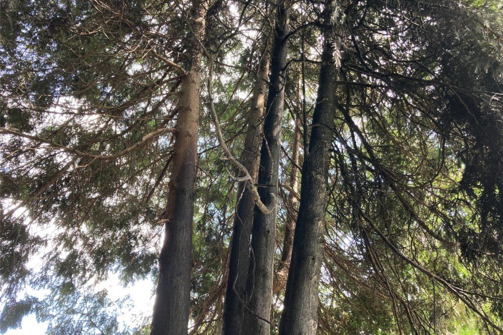 Der auf dem Grundstück befindliche Baum, fing Feuer. Das Bild verdeutlicht das Ausmaß des Unfalls.