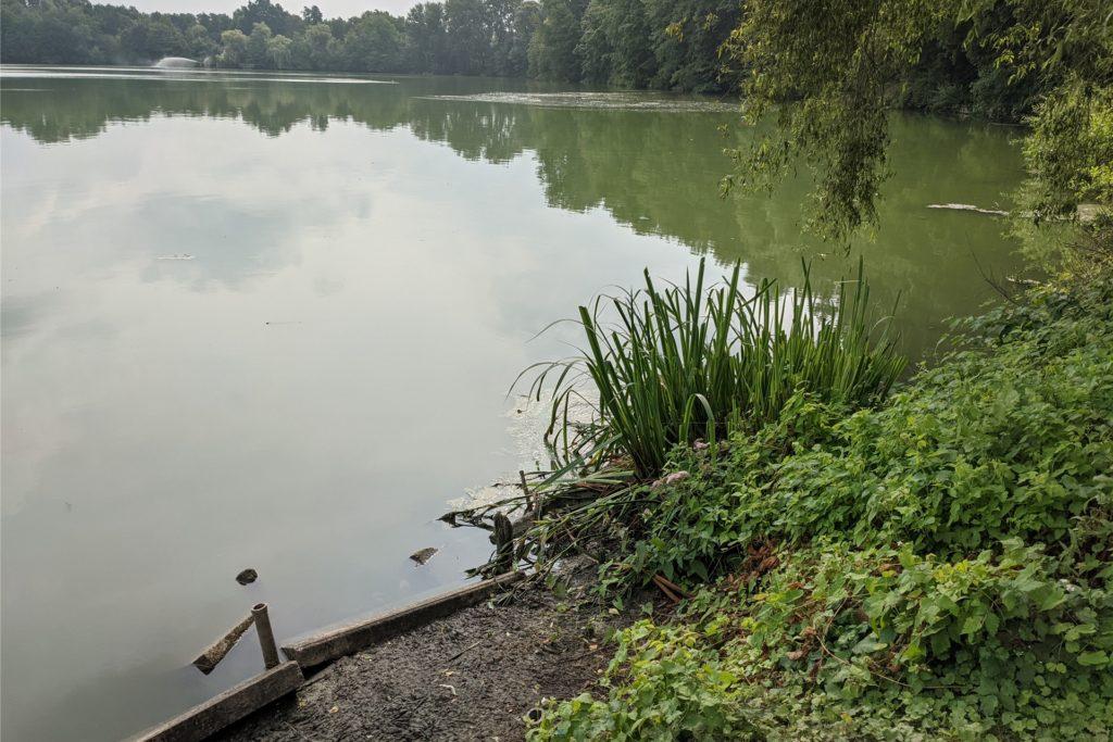 Die RWW stuft die grüne Farbe des Blauen Sees in Holsterhausen als nicht besorgniserregend ein.