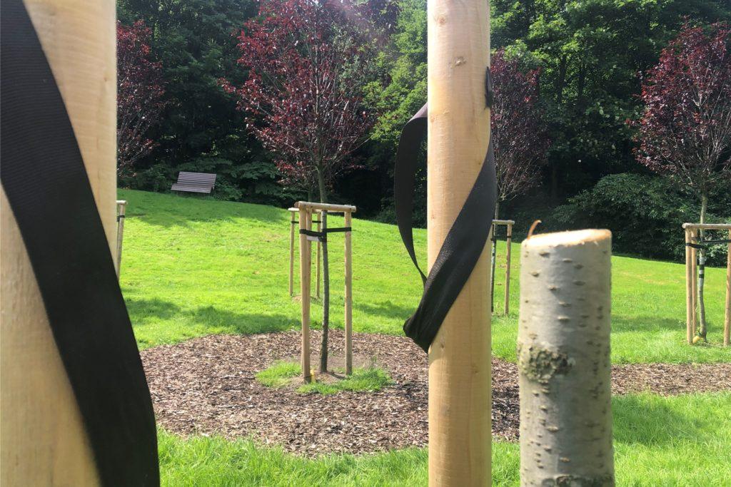 Zwei der Bäume aus dem Baumkreis wurden abgesägt.