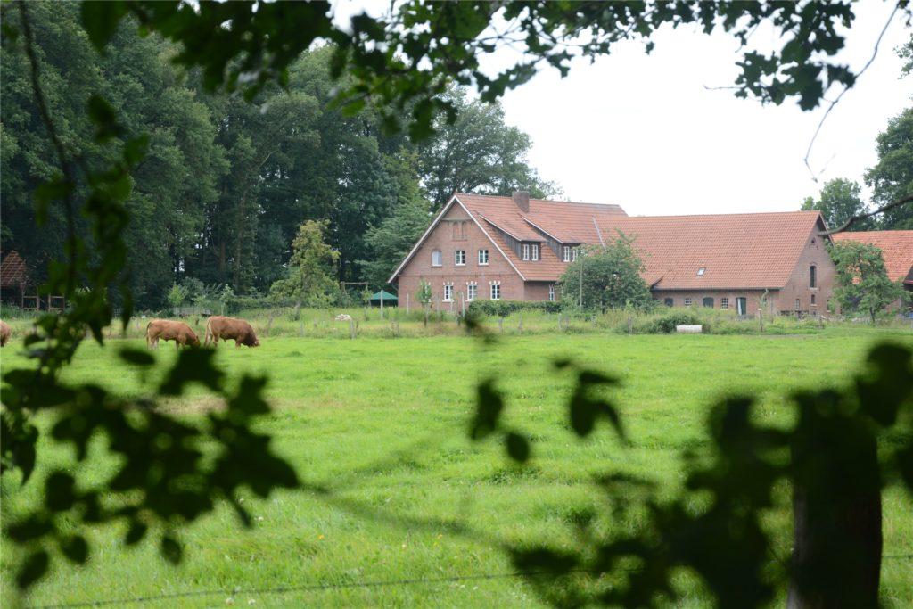 Die Bullen haben die Liesners auf einer separaten Weide untergebracht - so gibt es keinen Ärger in der Herde.
