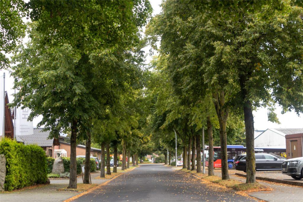 Die Linden im Düstermühlenweg bleiben stehen.