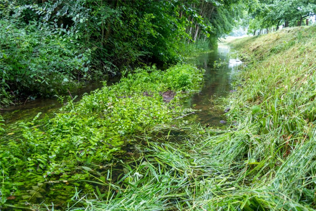 Auch wenn der Ölbach wieder Wasser führt, sind die Folgen der Trockenzeiten am Bewuchs zu erkennen.